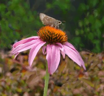 Butterfly on Pink Daisy by Jake Richter
