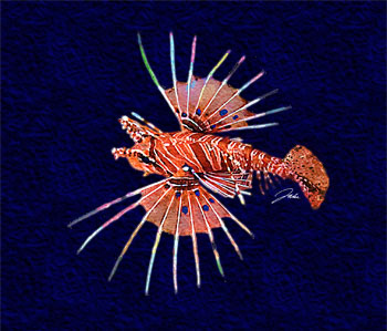 Fijian Spotfin Lionfish copyight Jake Richter